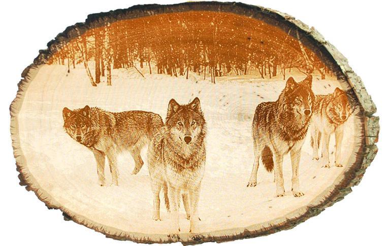 ph-wolf_pack_tree-slice